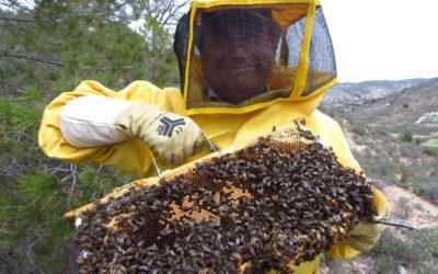 "Atanasio Serrano: ""Sin las abejas peligra la misma existencia humana"""